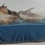 Tuna with shark bite