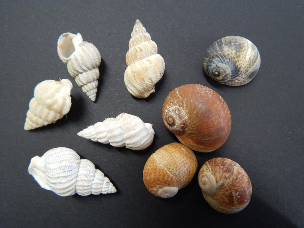 Gastropods