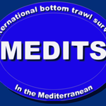 Logo Medits Project