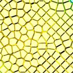 3d TETGEN generated seeds points